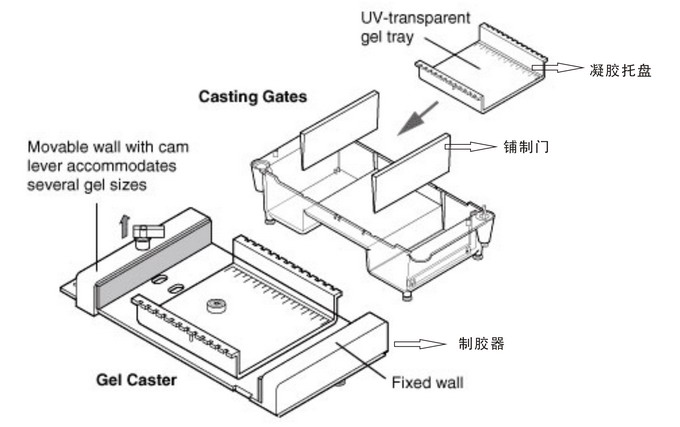 Bio-rad美国伯乐Sub-Cell® 96型槽电泳槽1704501