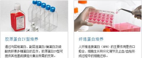BD BioCoat包被细胞培养瓶