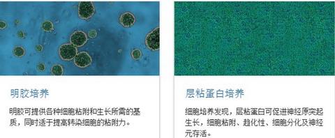 BD BioCoat包被细胞培养皿